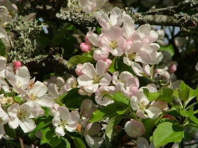alfa-omega's flowers!