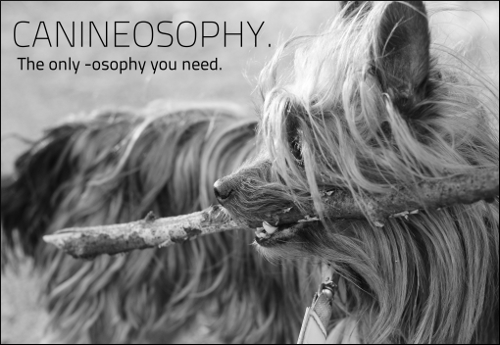 canineosophy
